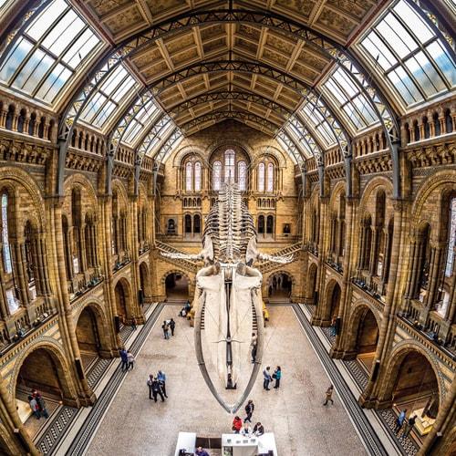 Natural History Museum London Photo Walks
