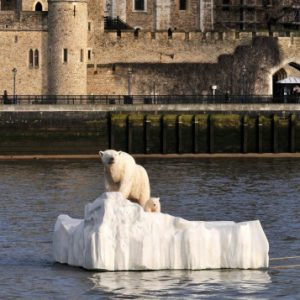 Polar Bear on the Thames, London