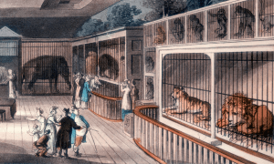 Tower of London Menagerie 1816