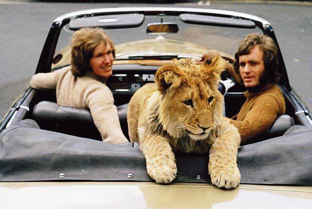 Harrods Lion Cub