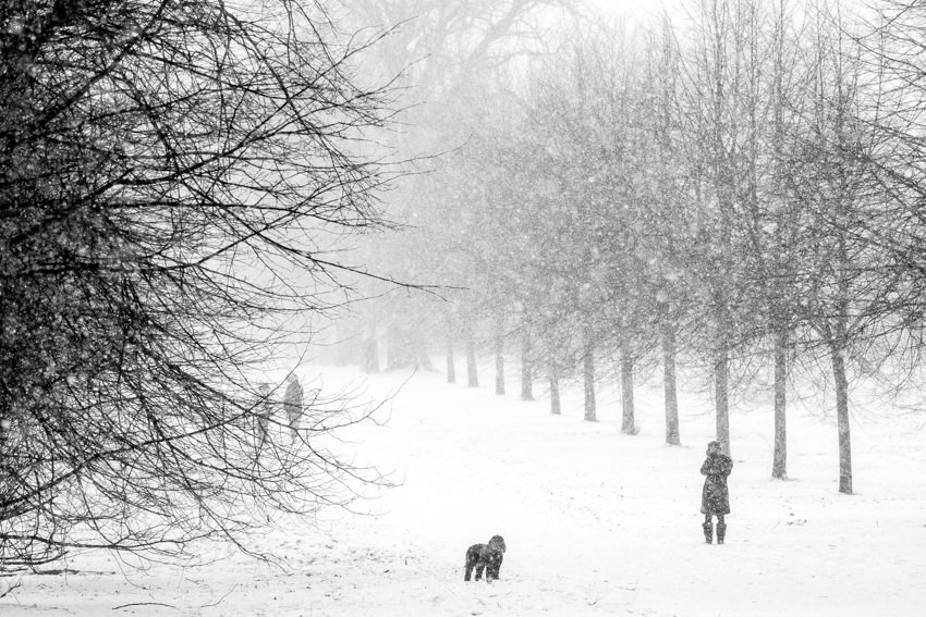 Dog walkers in the snow Hyde Park
