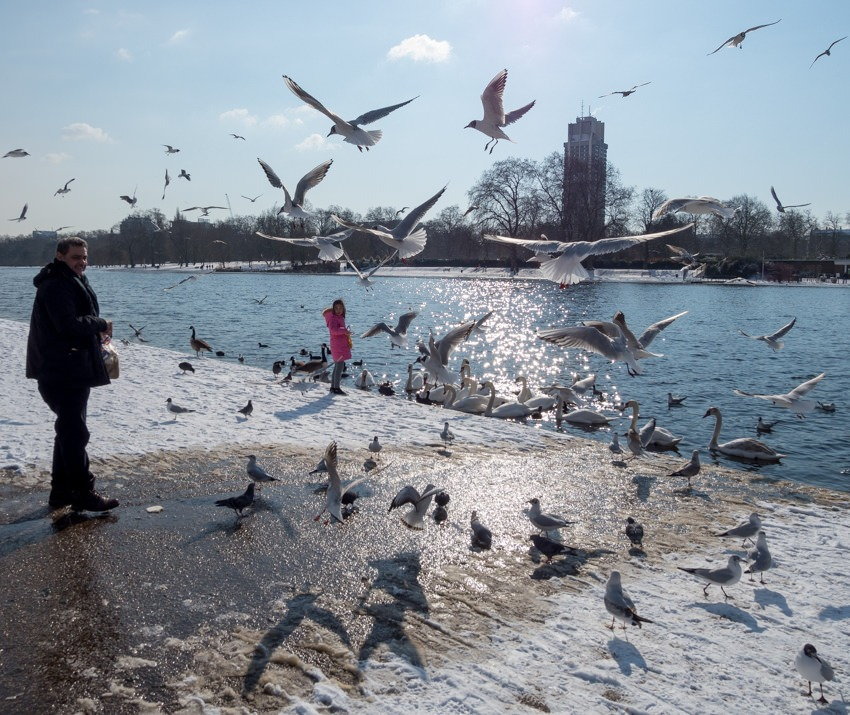 Feeding the birds in Hyde Park