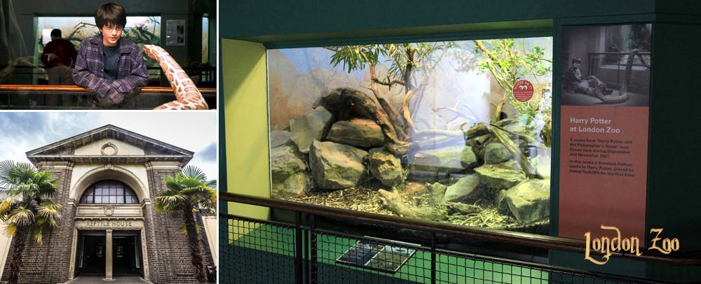 Harry Potter London Zoo Filming Location